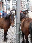 bay ponies
